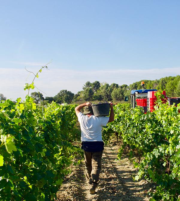 vignes, vins, domaine viticole