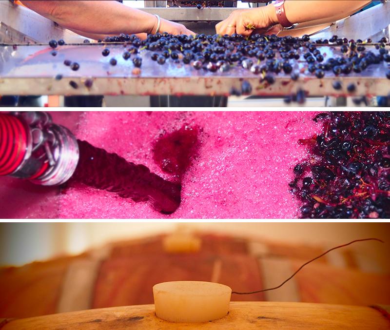 cave, caveau, vin, vins, biologique