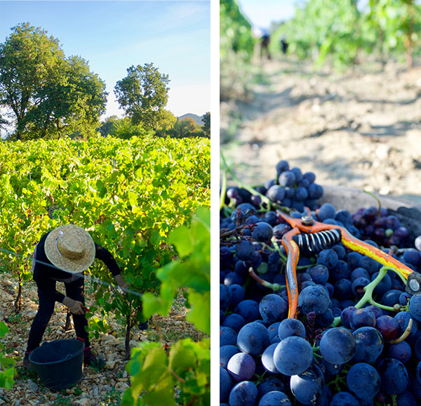 bio, vigne, domaine viticole, vacqueyras