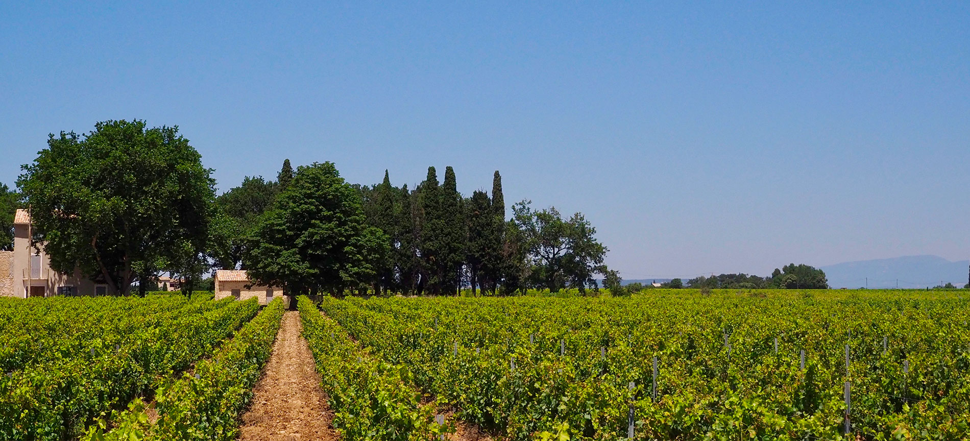 domaine viticole, vin, vacqueyras
