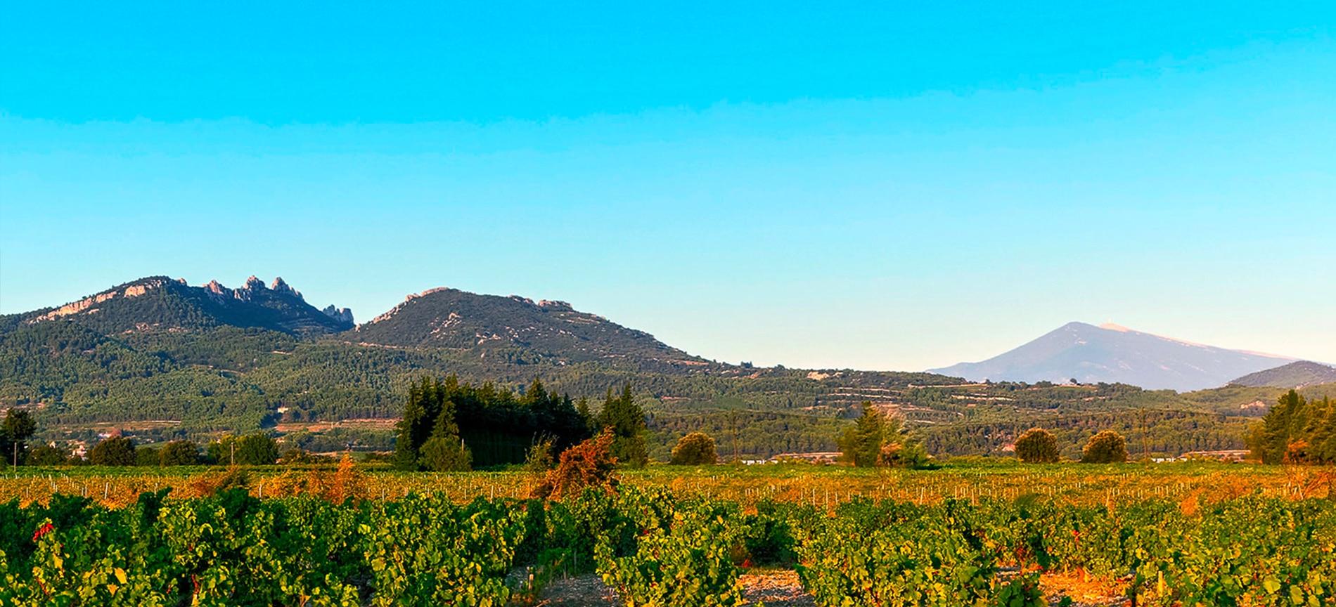 vignoble, domaine viticole, vin, vins